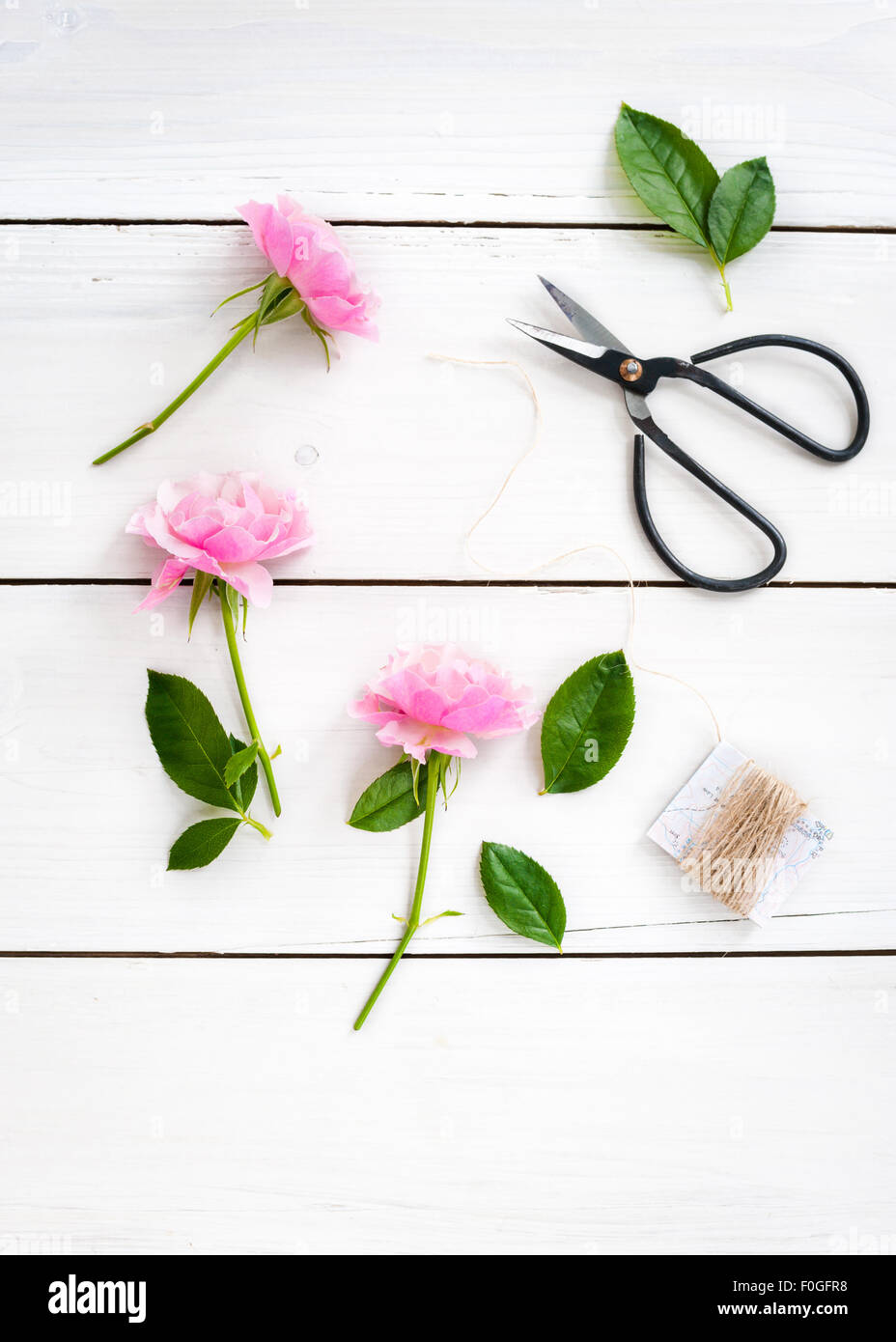 three cut pink roses with twine and black bonsai scissors - Stock Image