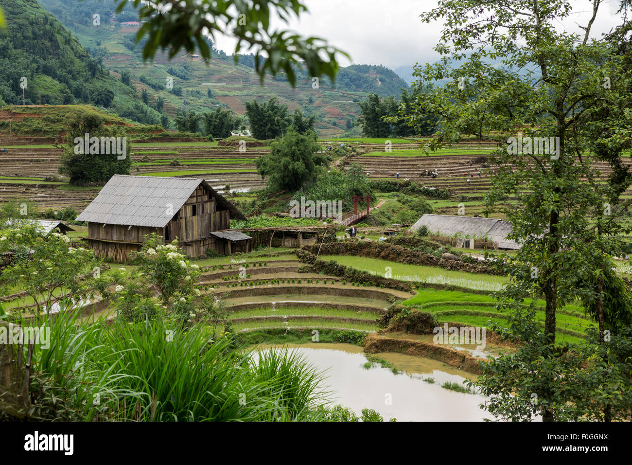 Freshly planted terraced rice paddies and farm buildings in Cat Cat village near Sa Pa in northern Vietnam during - Stock Image