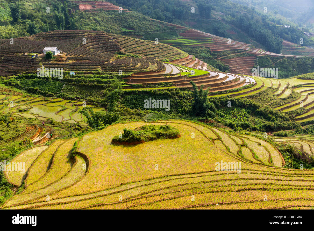 Terraced rice paddies in broken sunshine from above near Sa Pa northern Vietnam. Farmers are visible in the background. - Stock Image