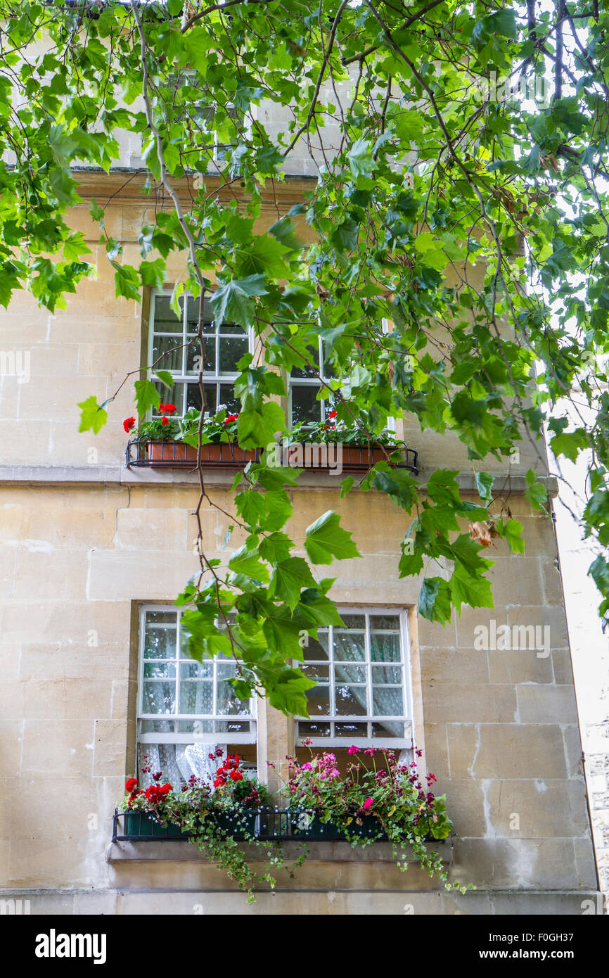 tree overhanging in front of stone building with pretty flowers in window boxes and sash windows - Stock Image