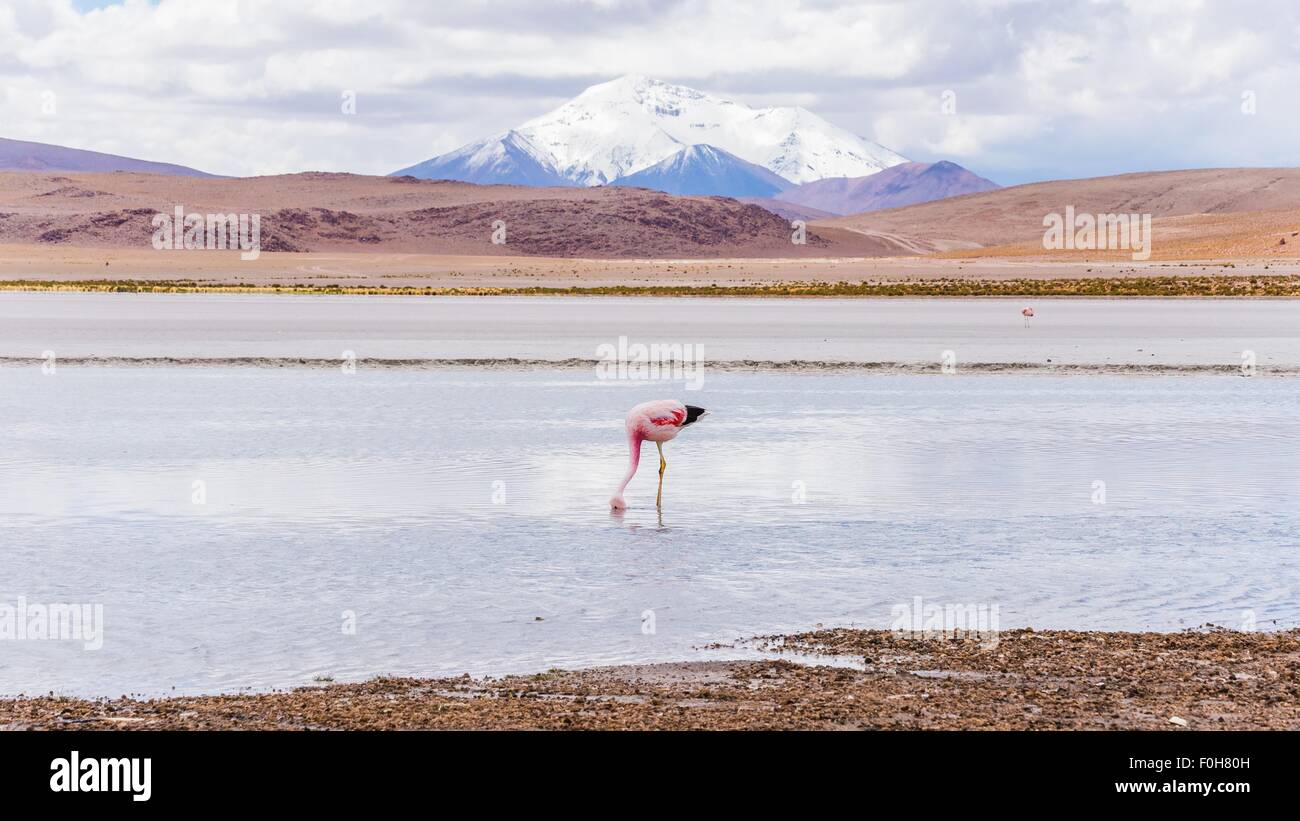 exploring the southern part of bolivia - Stock Image