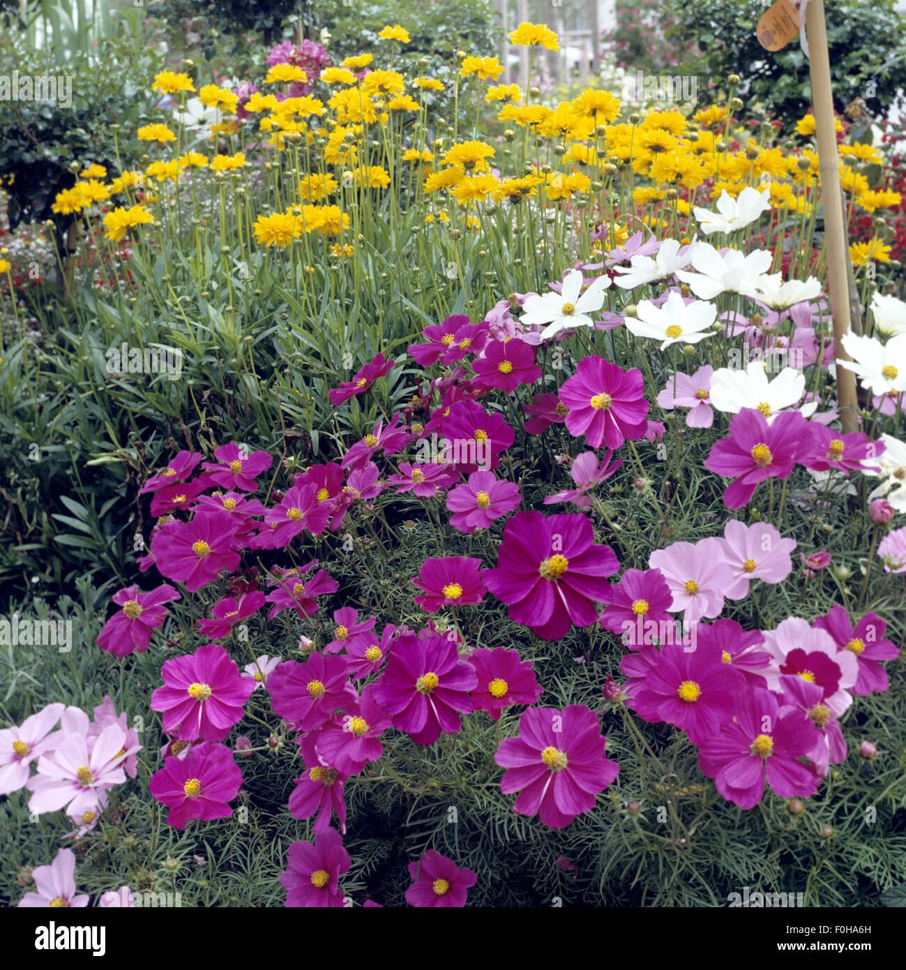 Blumenbeet, Schmuckkoerbchen Stock Photo