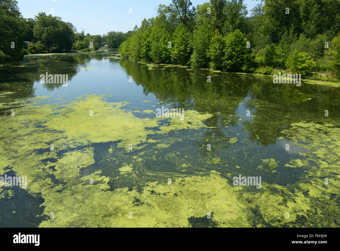 Algae bloom resulting from eutrophication, Ramapo River, northern NJ. Water pollution - Stock Image
