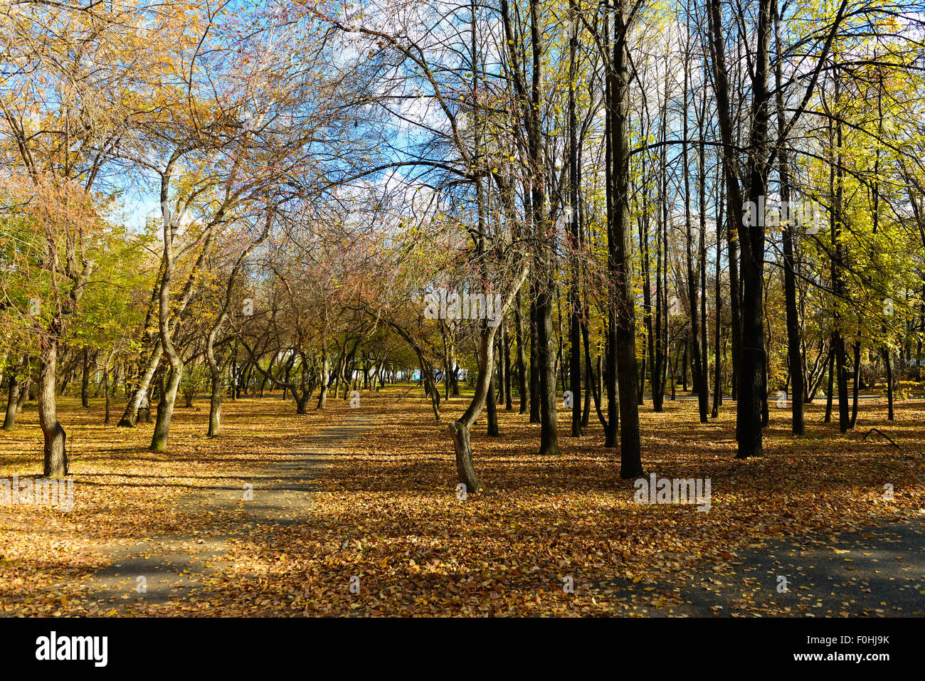 Fall autumn trees  in park - Stock Image