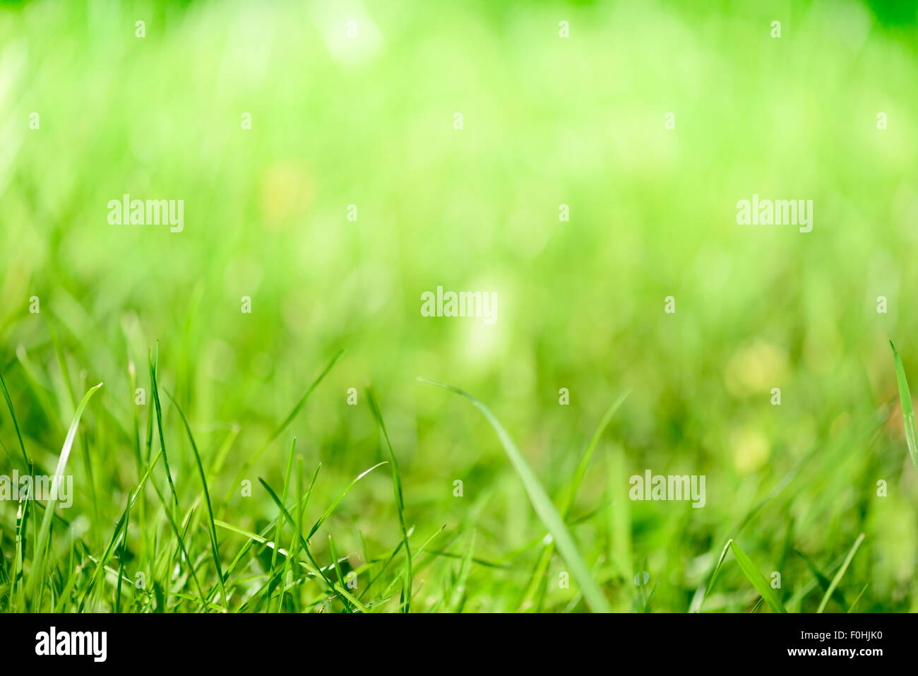 Blurred grass - abstract background, universal use - Stock Image