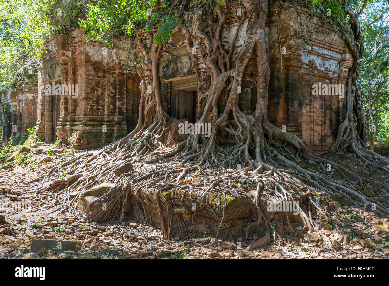 Root covered ruins of a Khmer temple at Koh Ker, Cambodia, which is 2.5 hours north of Siem Reap & Angkor.Stock Photo