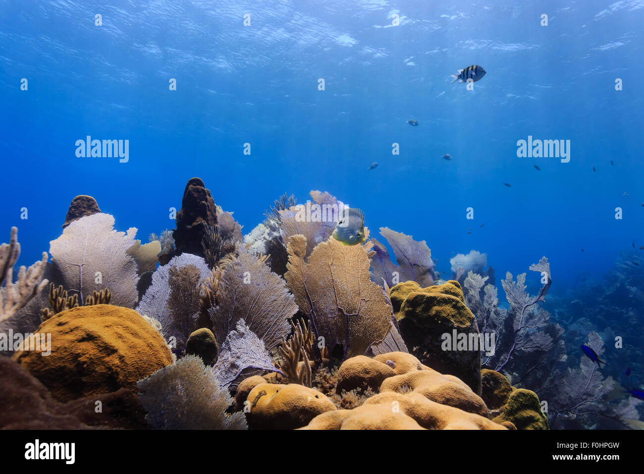 Landscape of colorful bright sea fans and fish on tropical coral reef - Stock Image