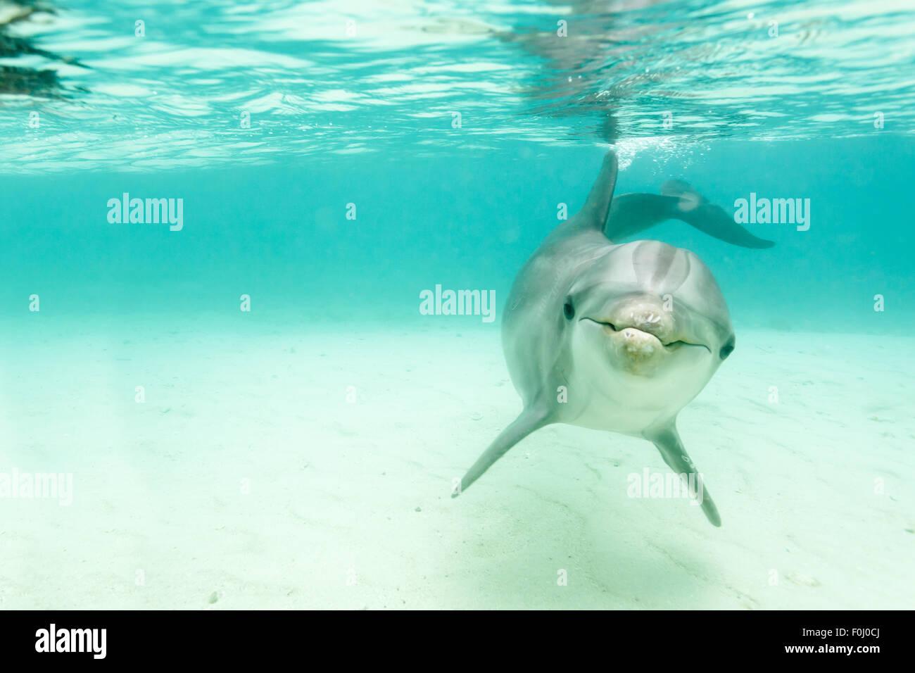 Dolphin School Of Fish Stock Photos & Dolphin School Of Fish Stock ...
