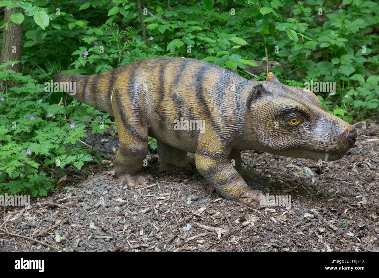 Cynognathus an extinct cynodont predatory therapsid found in the Triassic Dinosaurier Park Germany - Stock Image