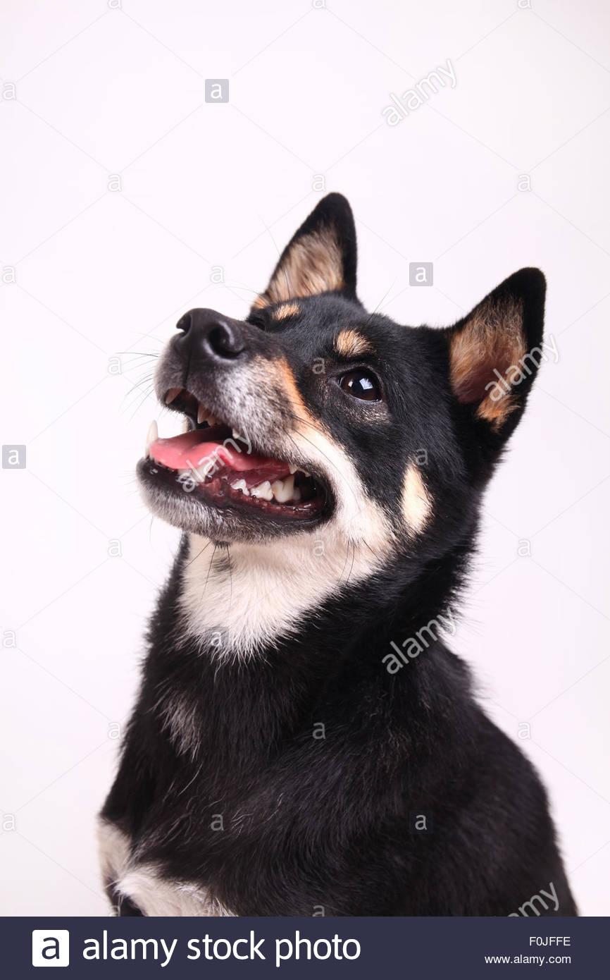 Best friend Stock Photo