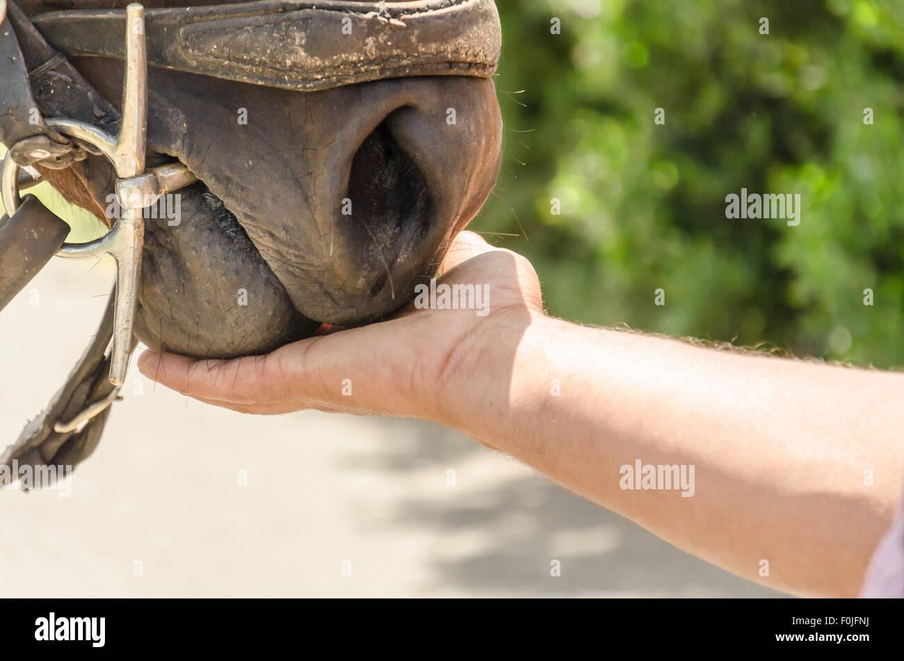 A person feeding a horse - Stock Image