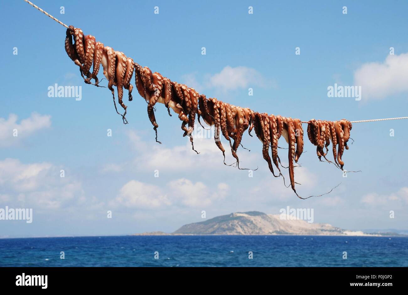 A row of Octopuses drying on a line at Mandraki on the Greek island of Nisyros. - Stock Image