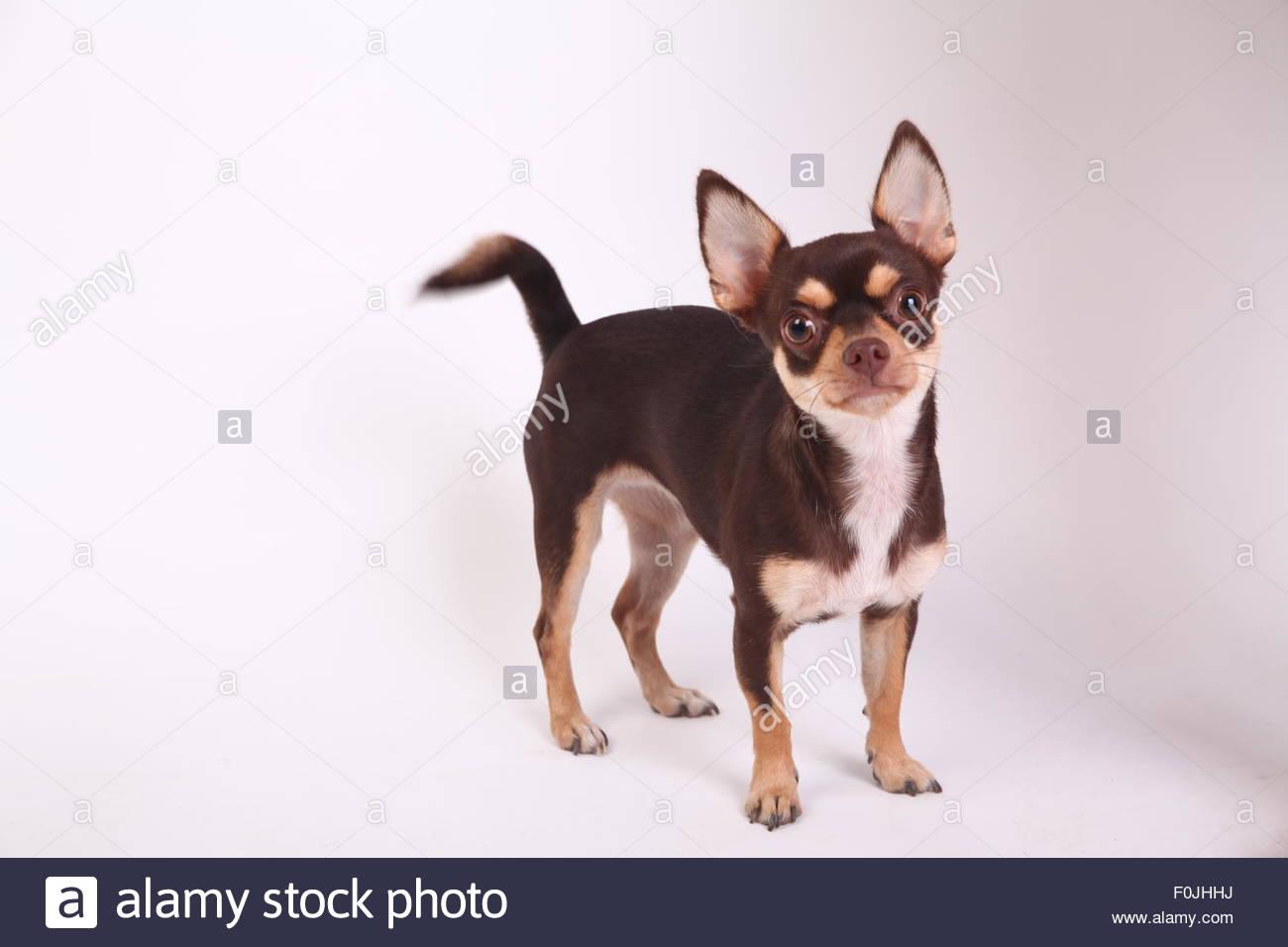 Best friend - Stock Image