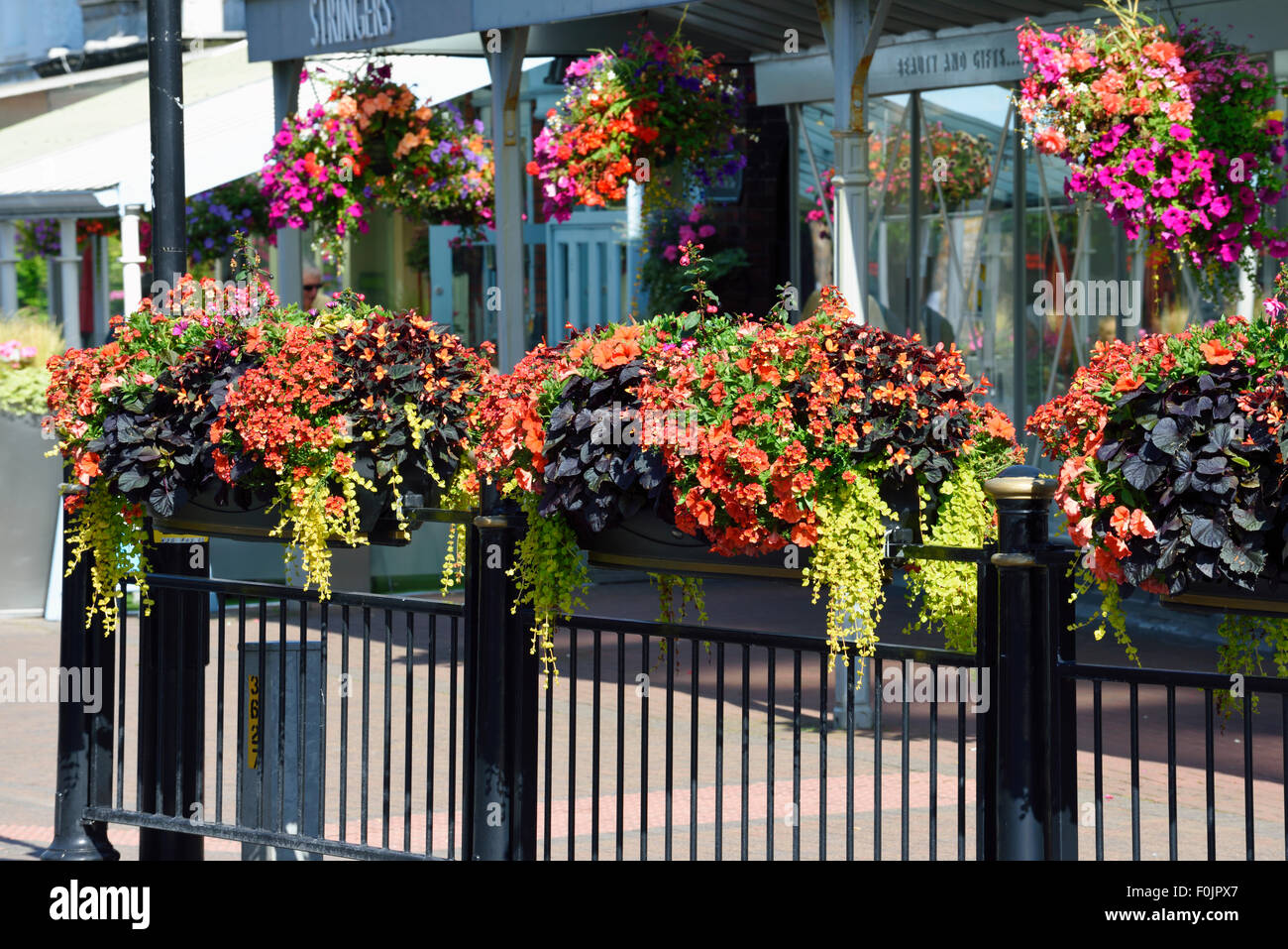 Row of colourful hanging baskets and window boxes outside a shop in Lytham, Lancashire - Stock Image