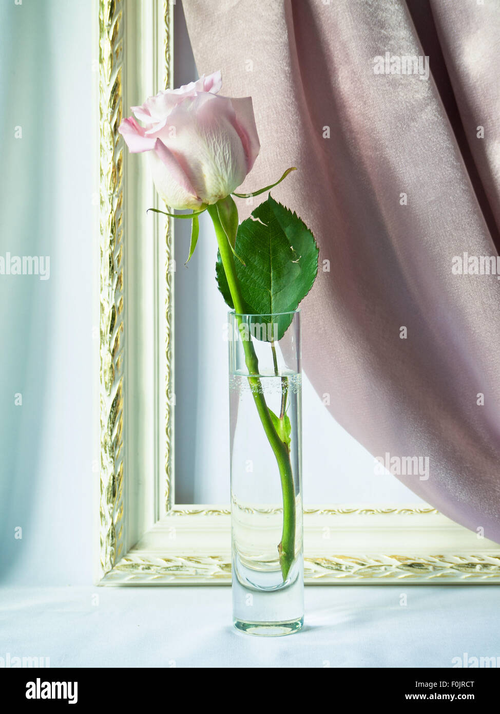 Rose in a glass vase Stock Photo