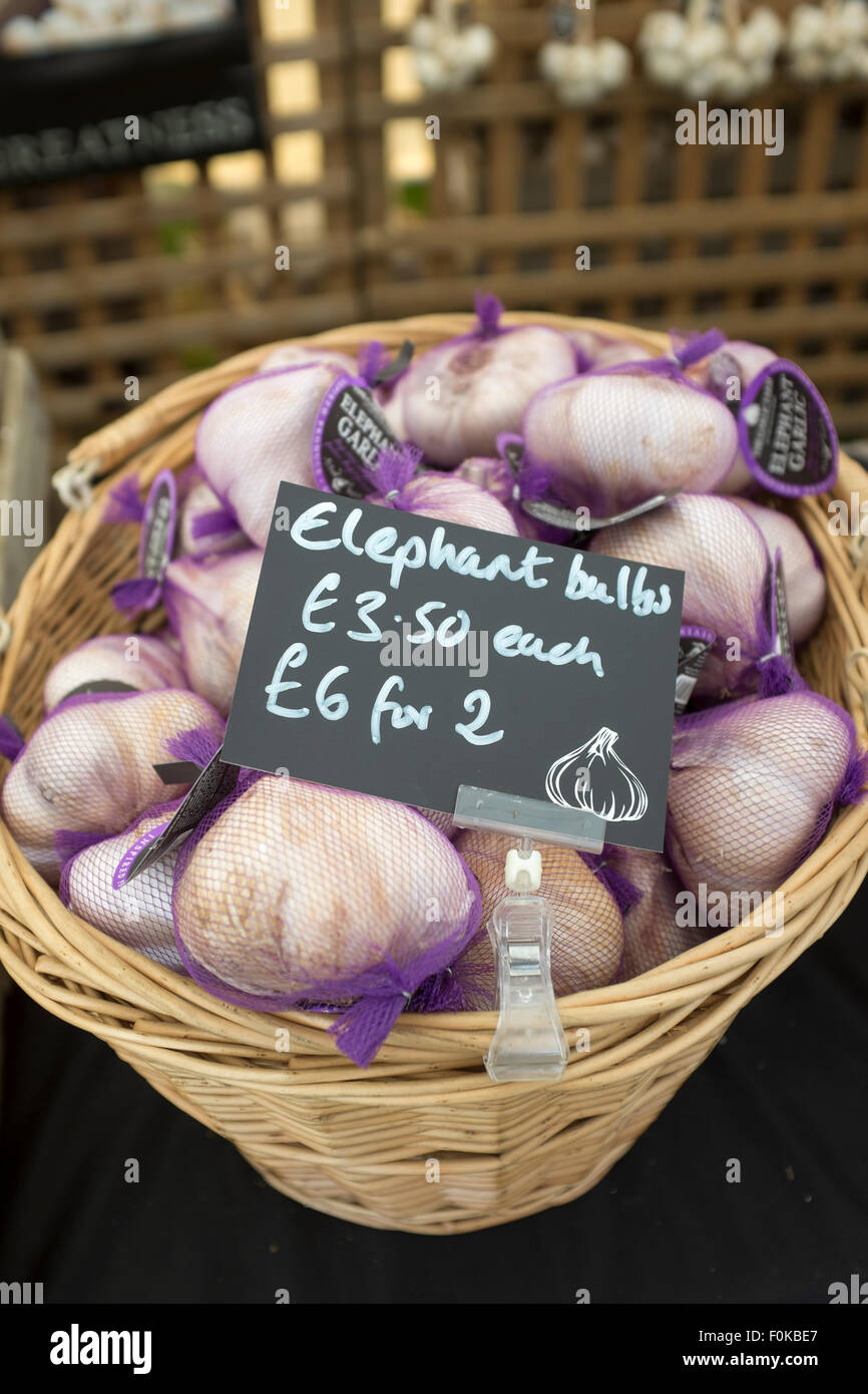 Elephant Garlic Bulbs on sale at the Garlic Festival on the Isle of Wight - Stock Image
