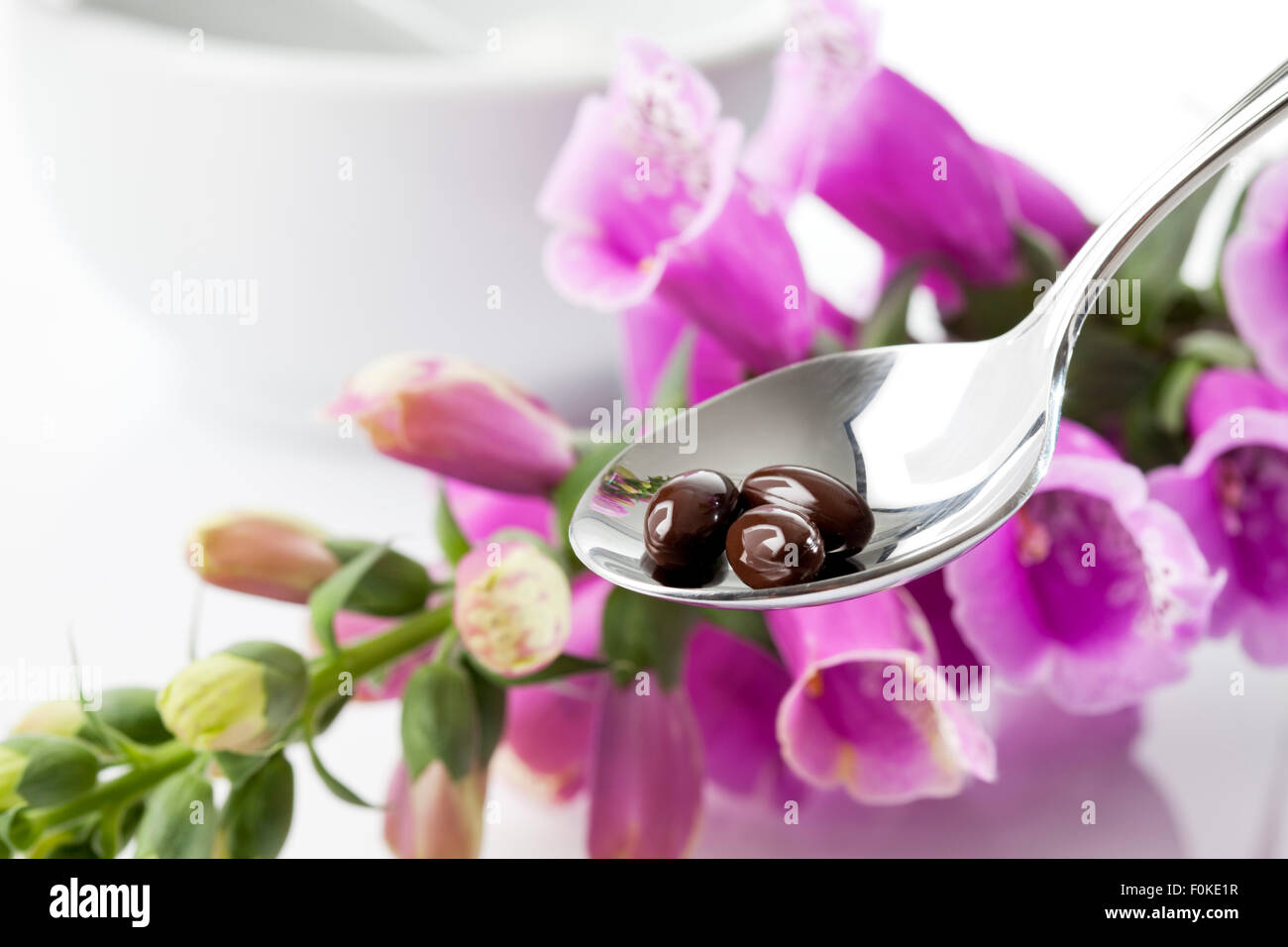 Foxglove, Digitalis purpurea, medical plant, spoon with capsules - Stock Image