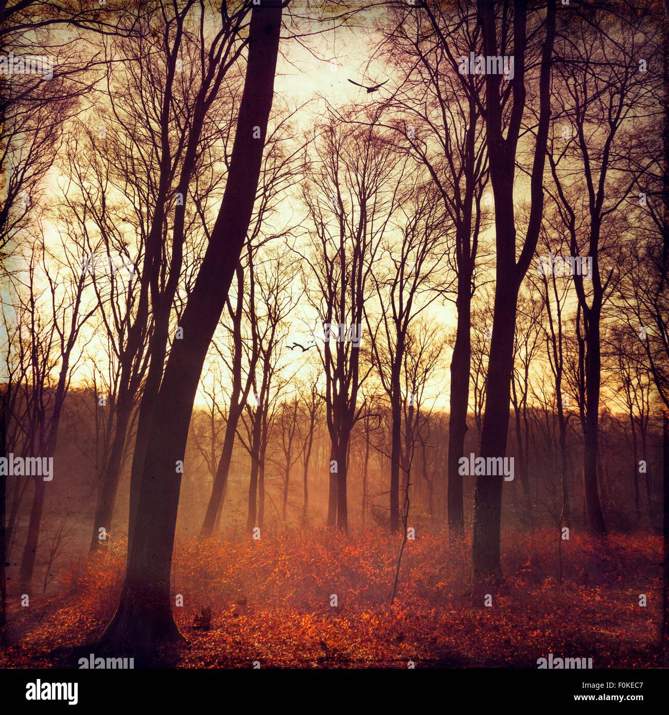 Autum forest at sunrise, digitally manipulated - Stock Image