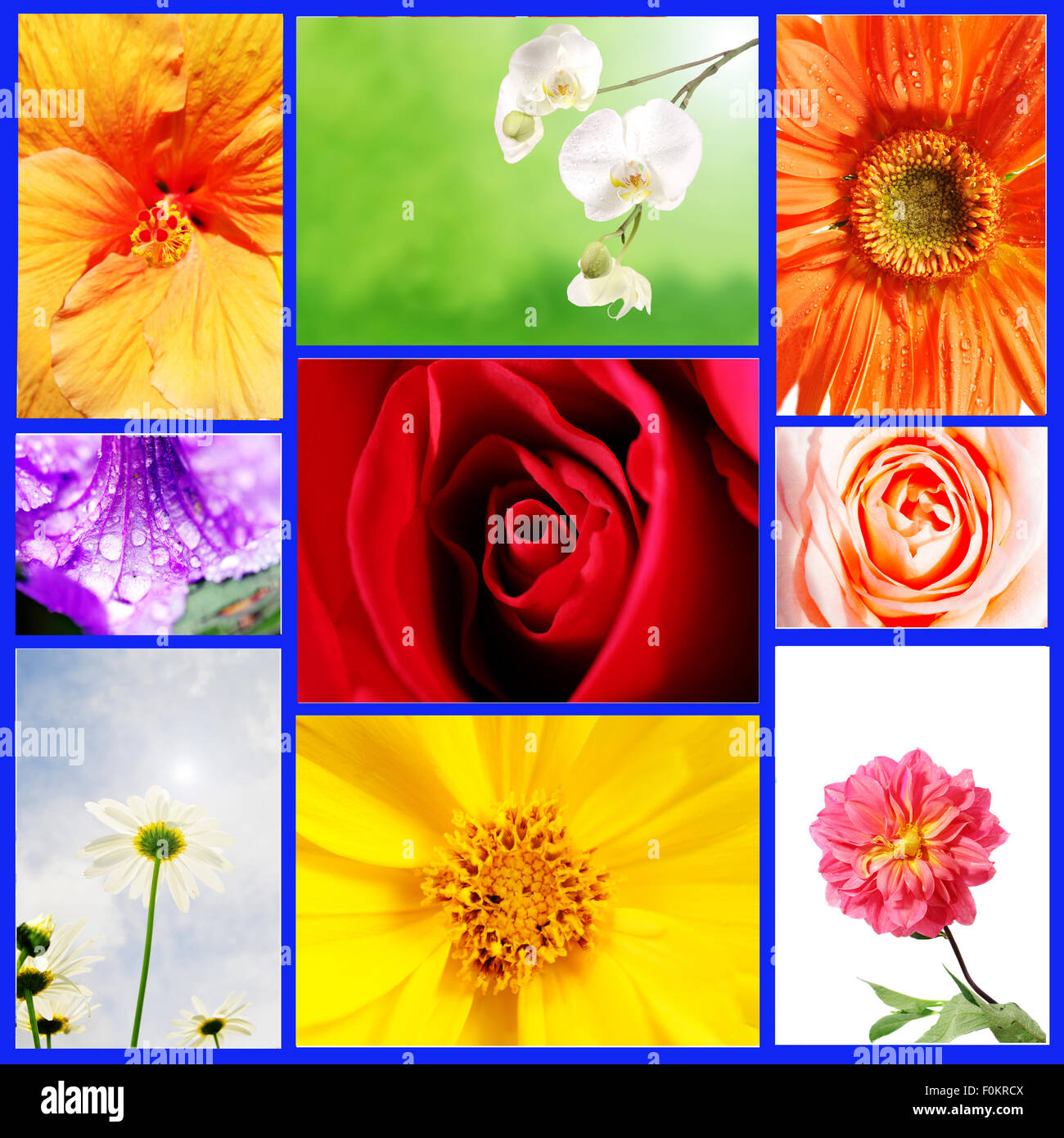 Several types of beautiful flowers in a collage stock photo several types of beautiful flowers in a collage izmirmasajfo
