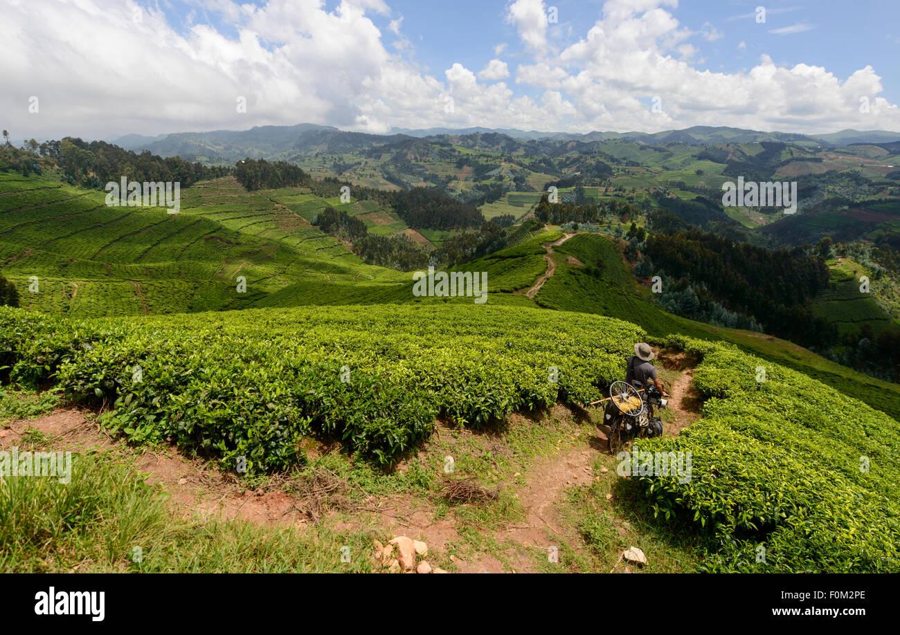 Cycling across the tea plantations of Rwanda, Africa - Stock Image