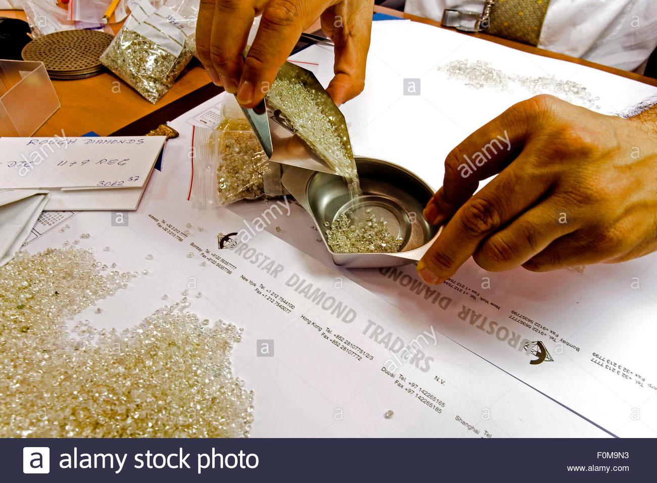 Rough diamonds, Eurostar Diamond Traders company owned by Kaushik Mehta, Indian Bombay businessman, Antwerp - Stock Image