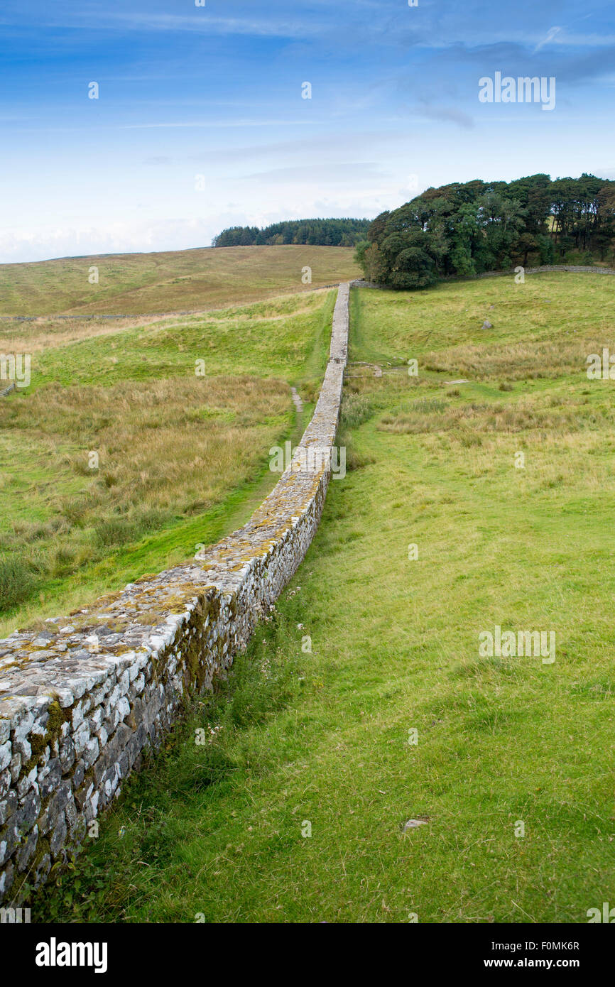 Europe, United Kingdom, Northumberland, Hadrian's Wall near Housesteads Roman Fort - Stock Image
