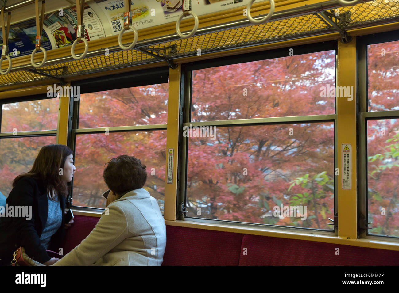 Autumn trees viewed from train on the Hakone-Tozan railway, near Gora, Hakone, Tokyo, Japan, Asia - Stock Image