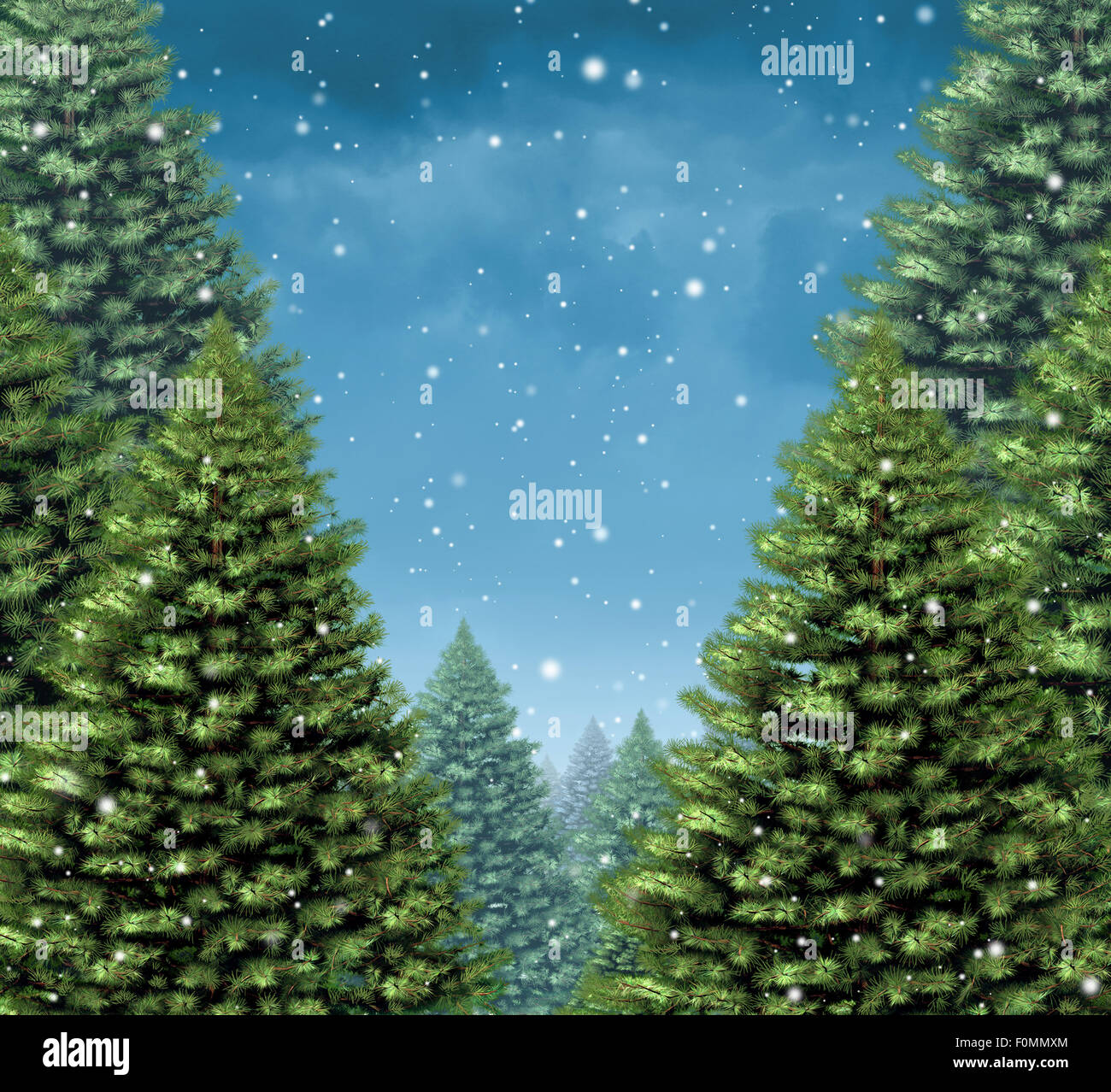 Winter tree background concept as a group of Christmas trees with snow flakes falling from a cold blue sky as a - Stock Image