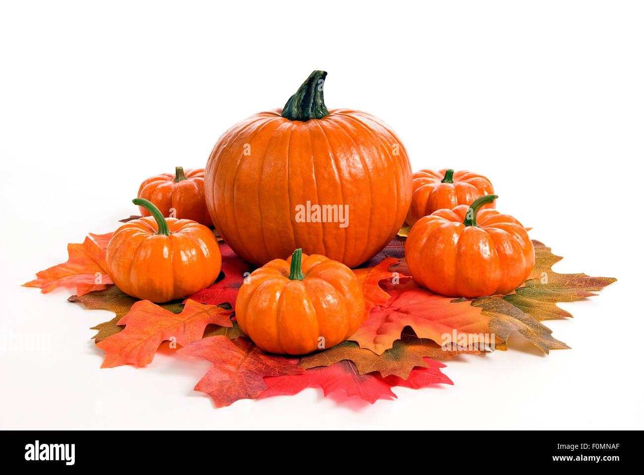 Autumn Or Fall Pumpkin Centerpiece Arrangement Stock Photo