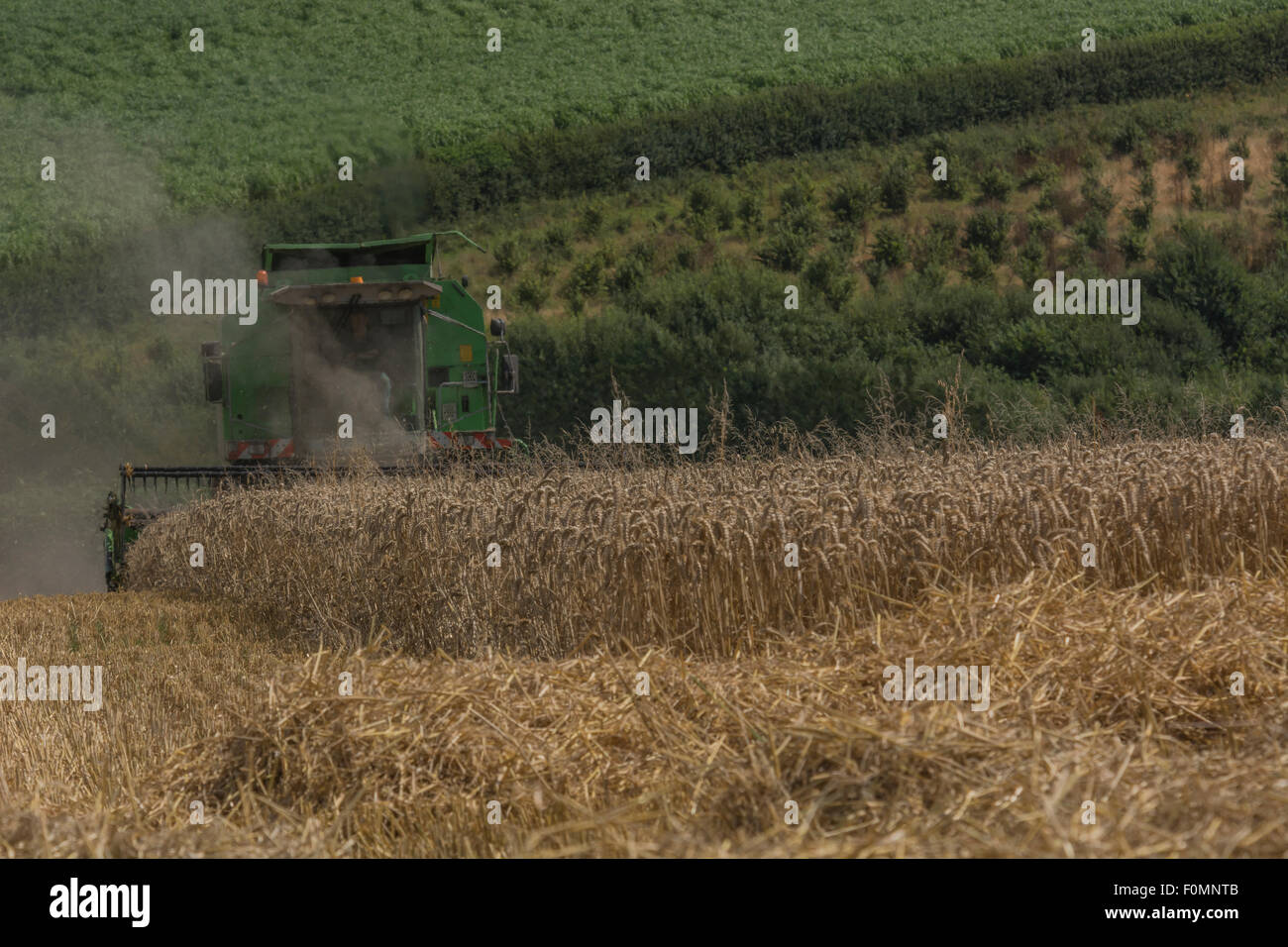 Combine harvester cutting cereal crop - on sloping ground / field. Metaphor for food security / growing food. - Stock Image