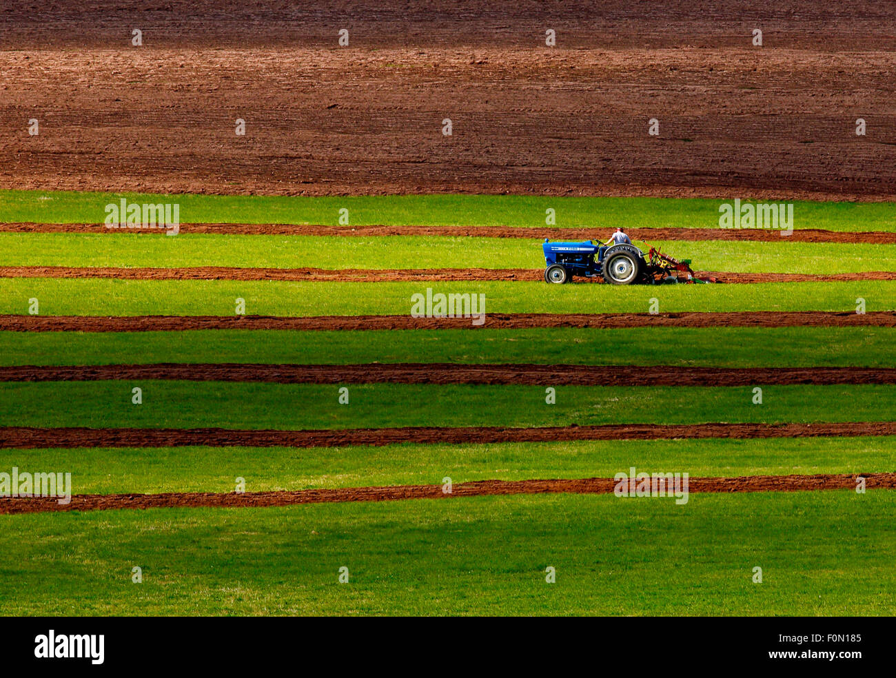 A competitor in the tractor plowing class at the 2014 New Brunswick plowing match is spotlighted by the sun. - Stock Image