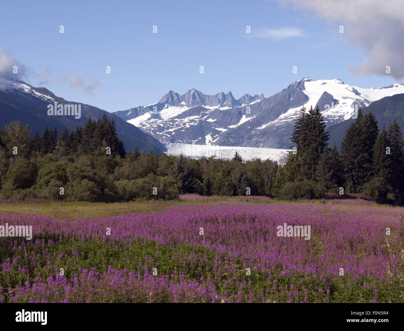 Mendenhall Glacier Southeast Alaska - Stock Image