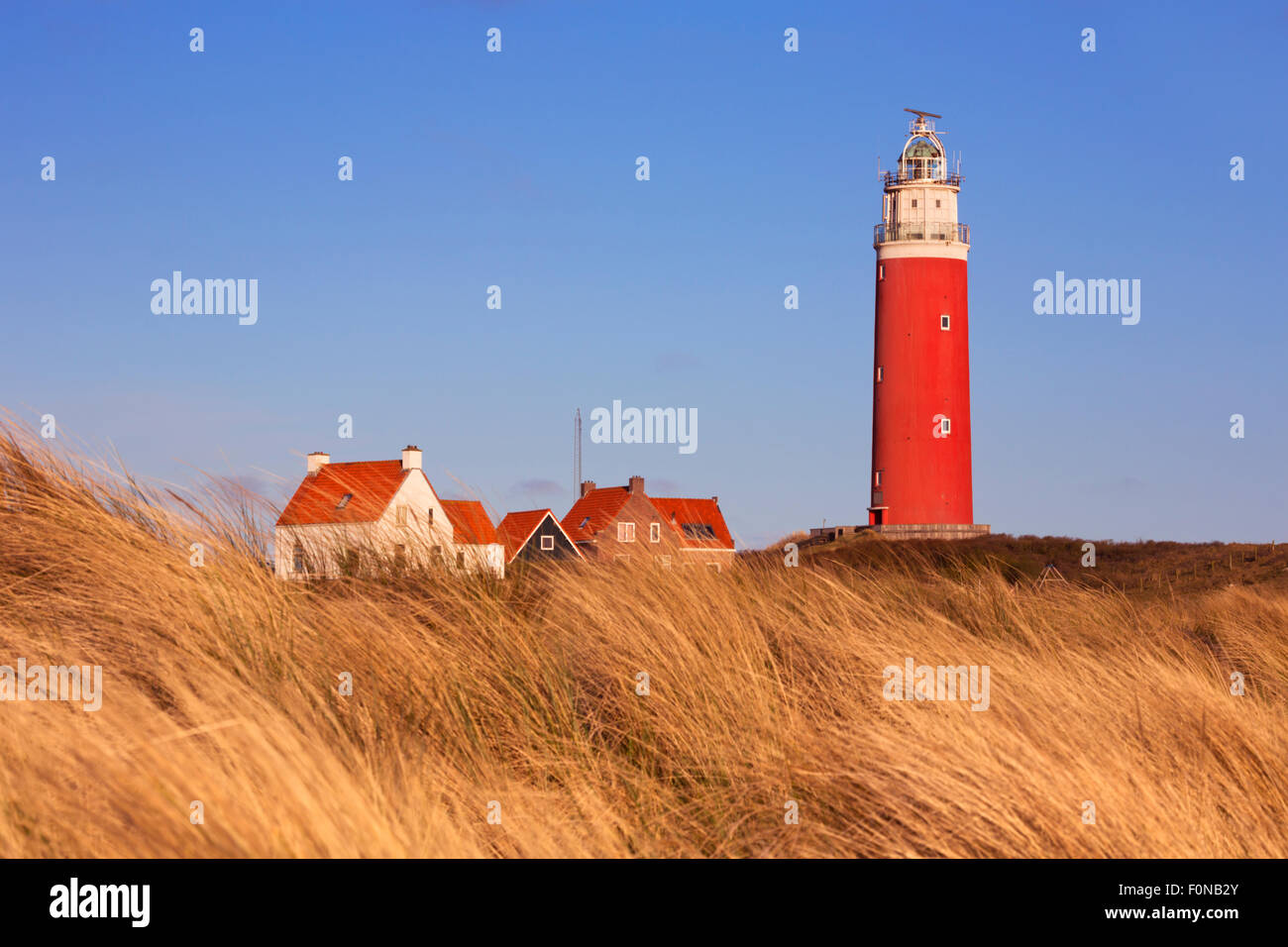The lighthouse of the island of Texel in The Netherlands surrounded by tall dune grass in beautiful early morning - Stock Image