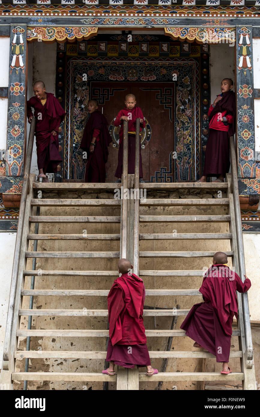 Young Buddhist monks playing at Gangtey monastery Bhutan - Stock Image