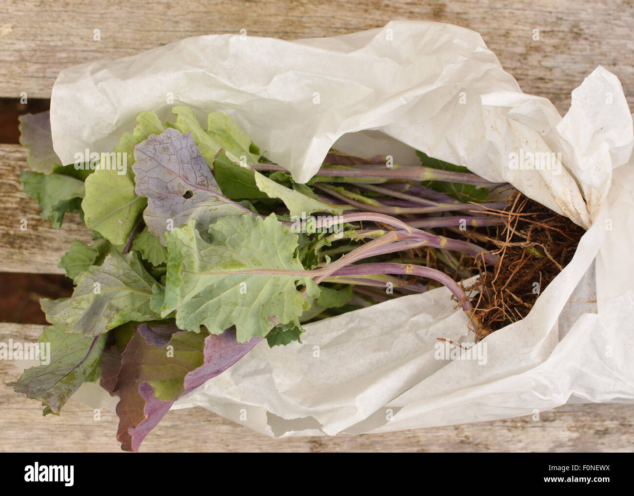 Mail Order Plants Stock Photos Mail Order Plants Stock Images