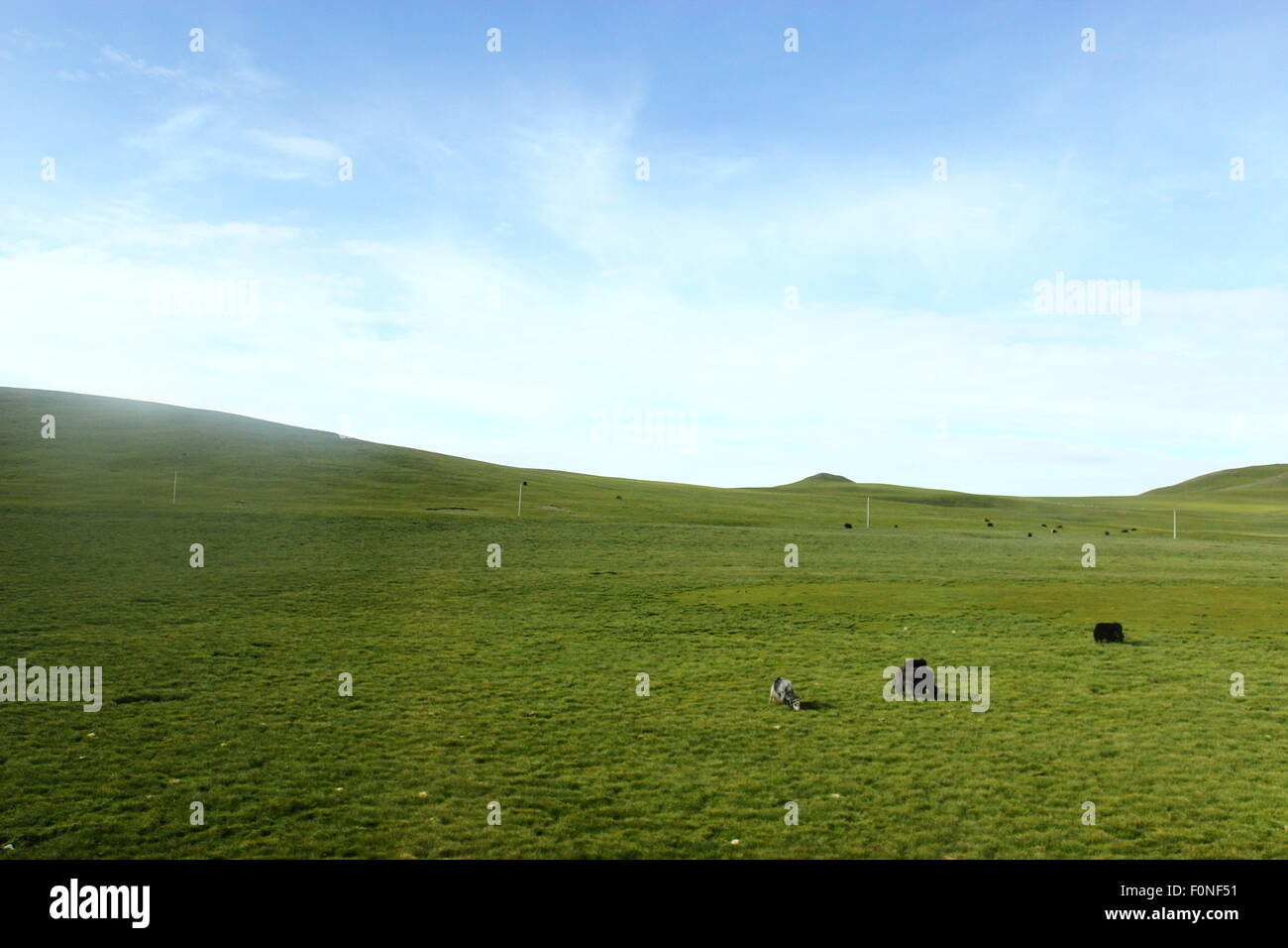 Chn. 13th Aug, 2014. CHINA - September 18 2014: (EDITORIAL USE ONLY. CHINA OUT)The Qinghai-Tibet Railway - Stock Image
