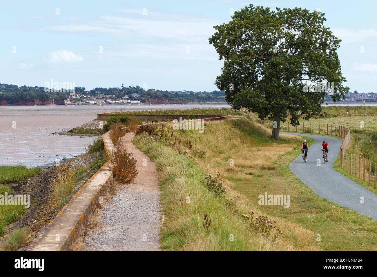 Cyclists on west side of river Exe trail and Coast path, heading north. - Stock Image