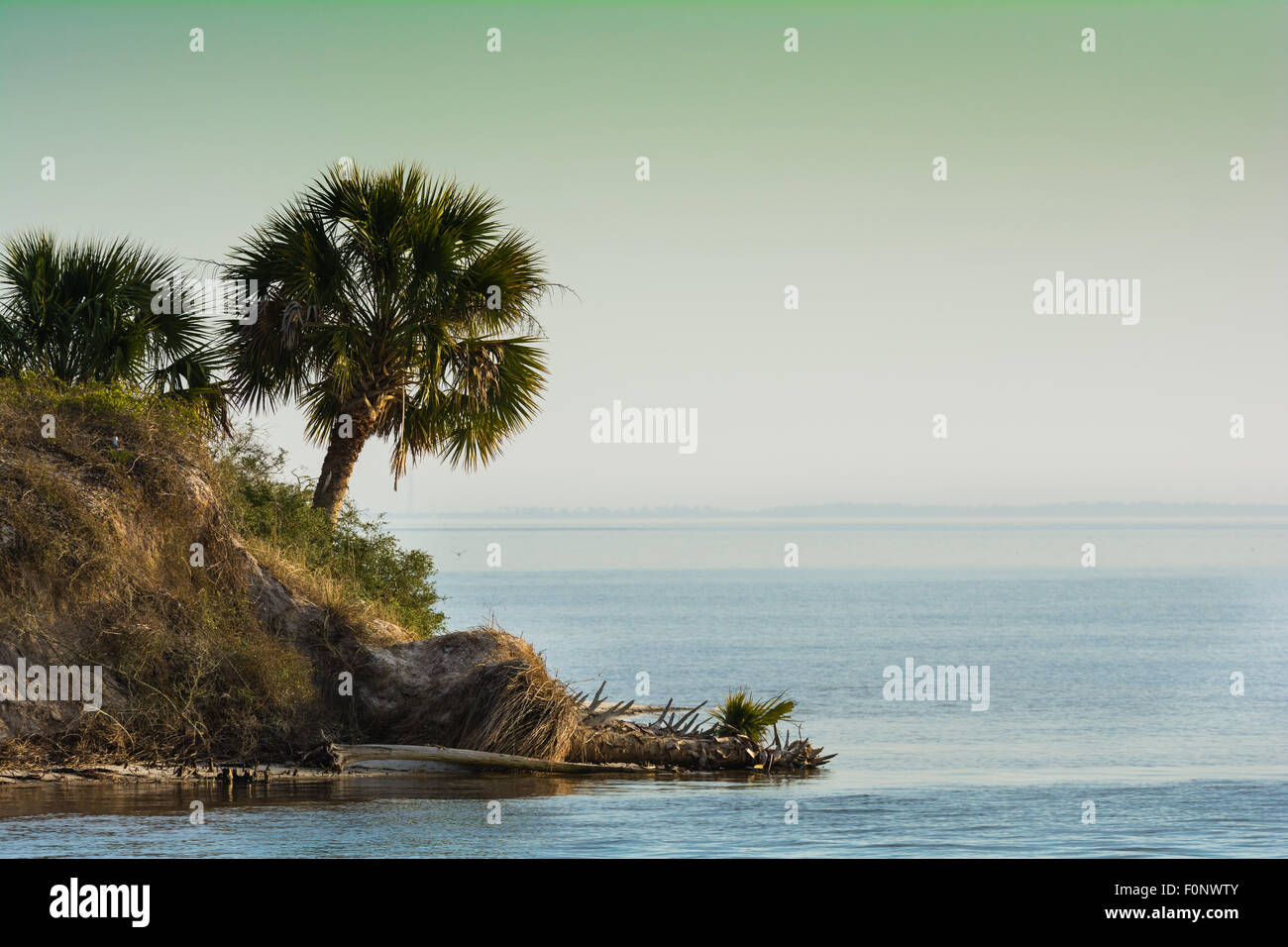 Palm tree leans over Gulf of Mexico in Florida's Forgotten Coast - Stock Image