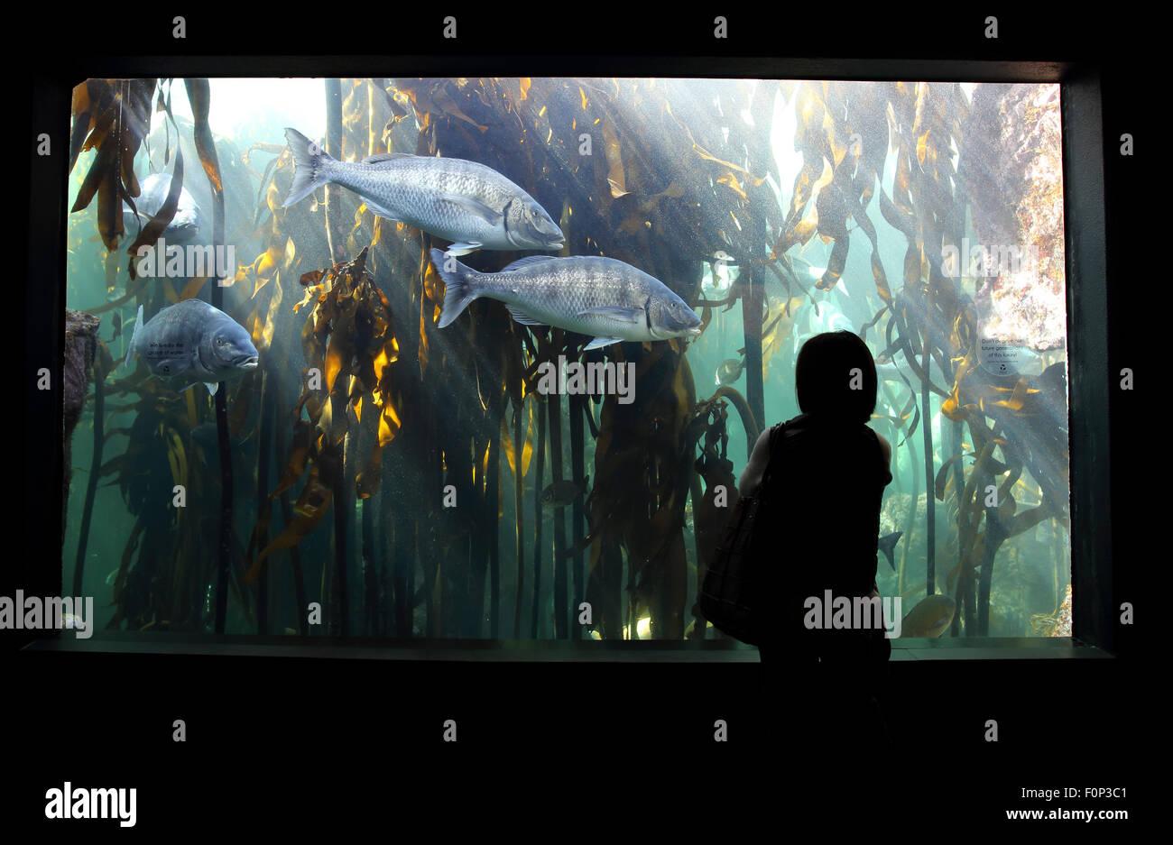 People looking at fish inside Cape Town aquarium - Stock Image