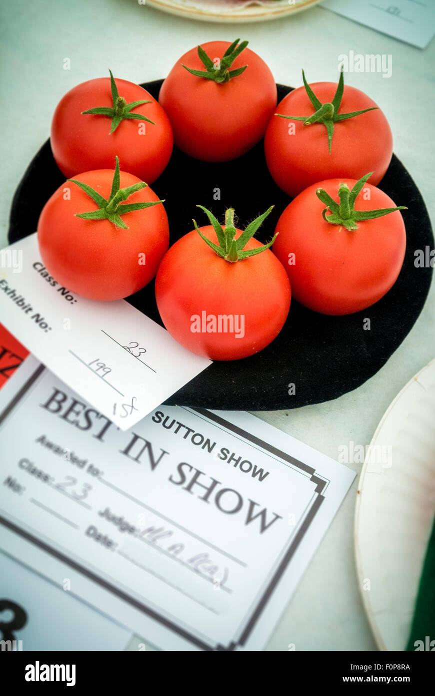 Best in show award for tomatoes at country show - Stock Image