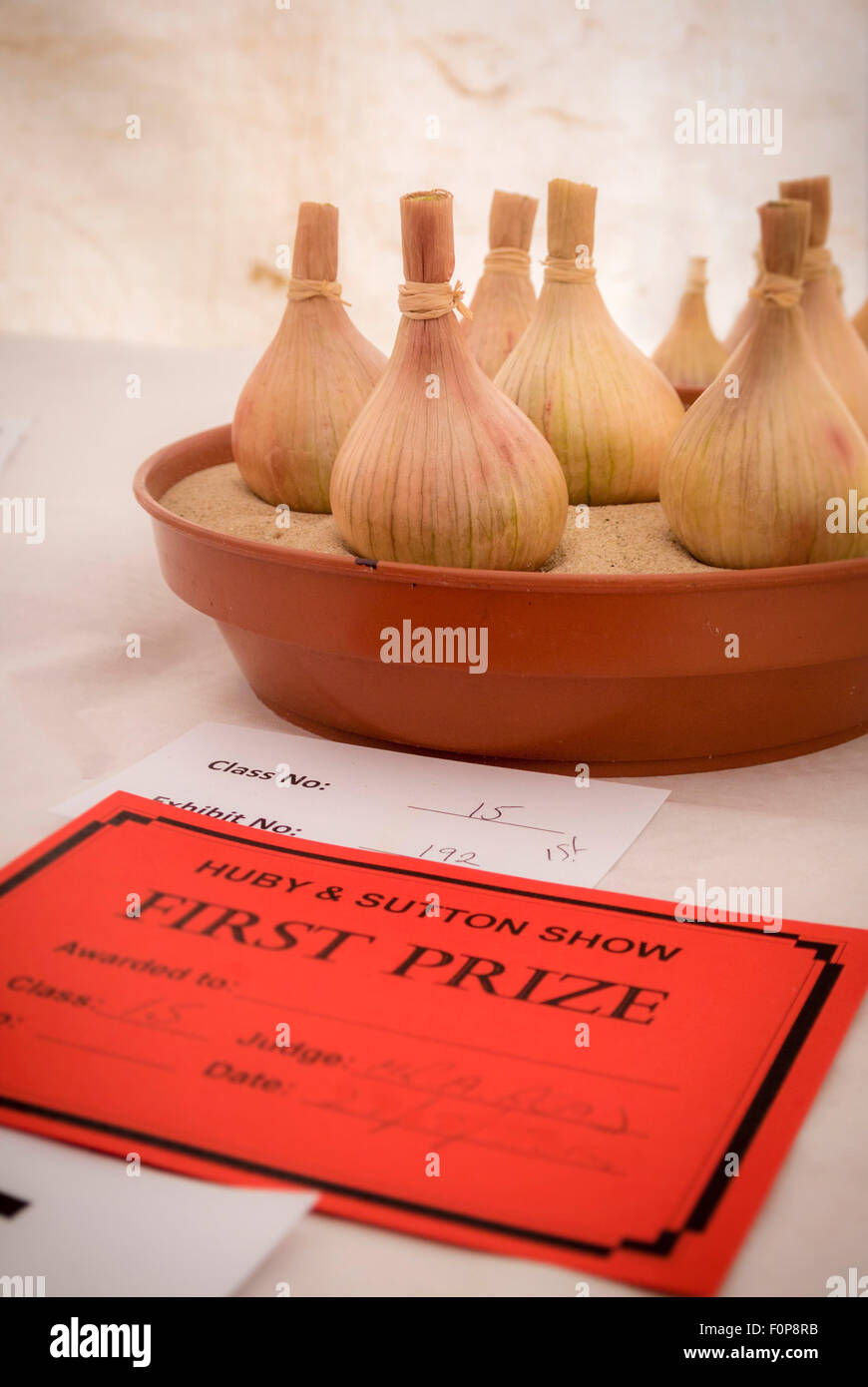 First prize award for onions at local country show - Stock Image