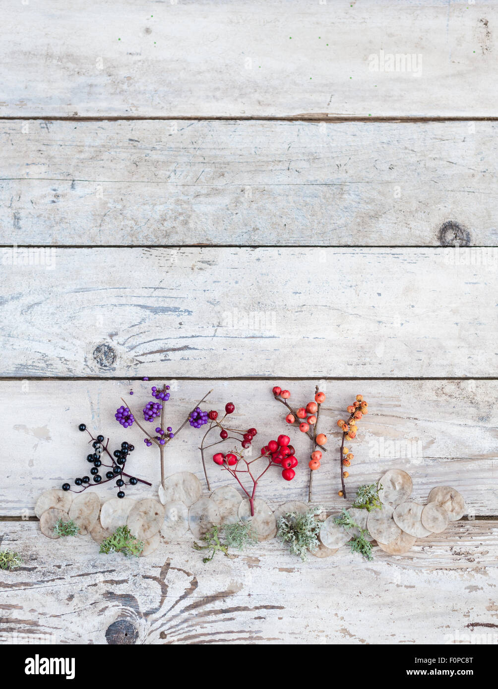 An arrangement of natural Autumn findings - coloured berries moss and honesty seedpods - Stock Image