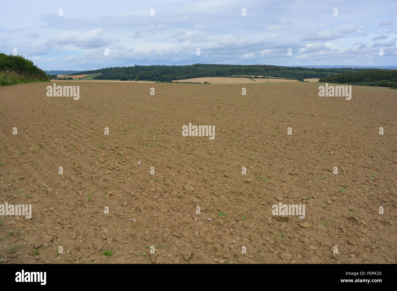 Ploughed field in the Howardian Hills, an Area of Outstanding Natural Beauty, near Terrington, North Yorkshire, - Stock Image