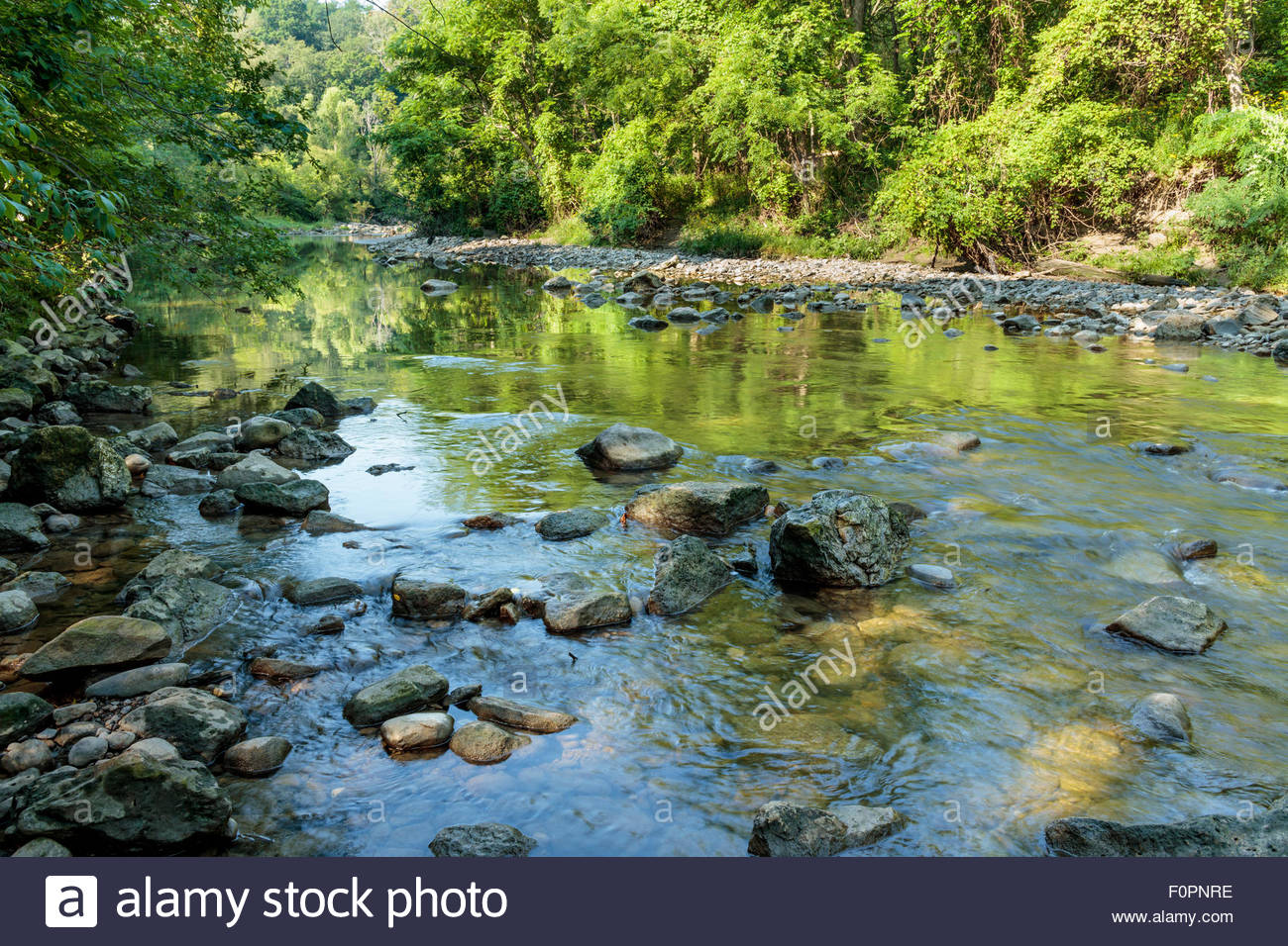 Highland Creek in the Carolinian Forest of Colonel Danforth Park on a hot windless summer morning in Toronto Ontario - Stock Image