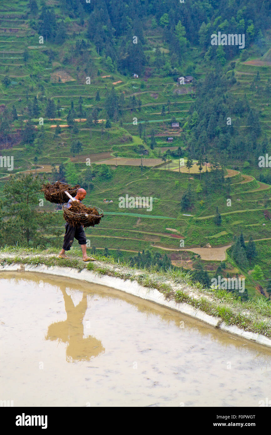 Rice worker in Guizhou province Stock Photo