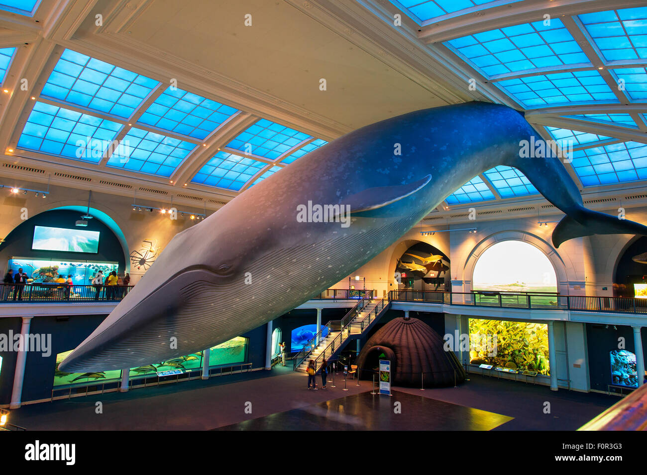 New York City, American Museum Of Natural History - Stock Image