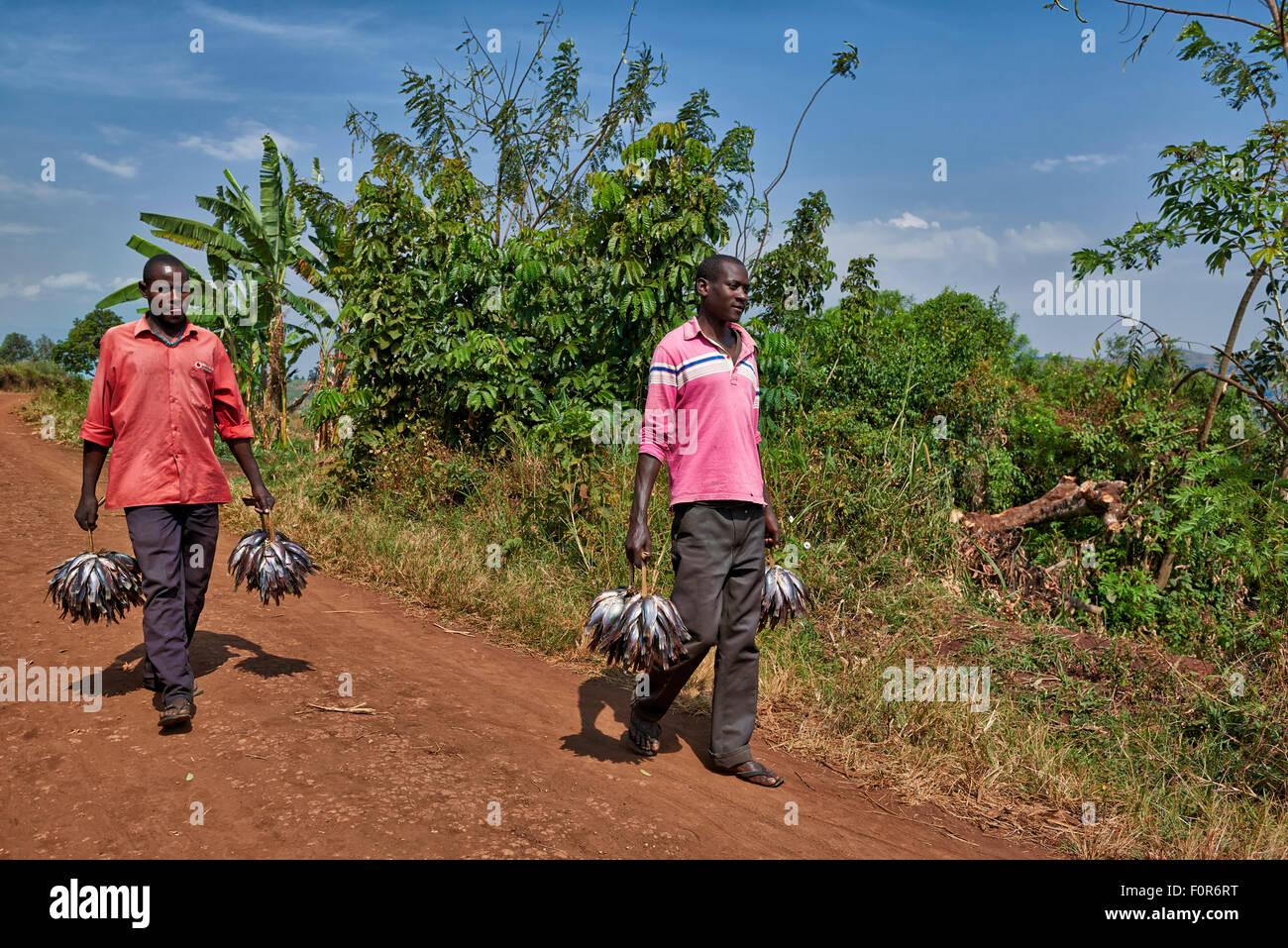 fishermen bringing their catch home, Bunyaruguru Crater Lakes region, Uganda, Africa - Stock Image