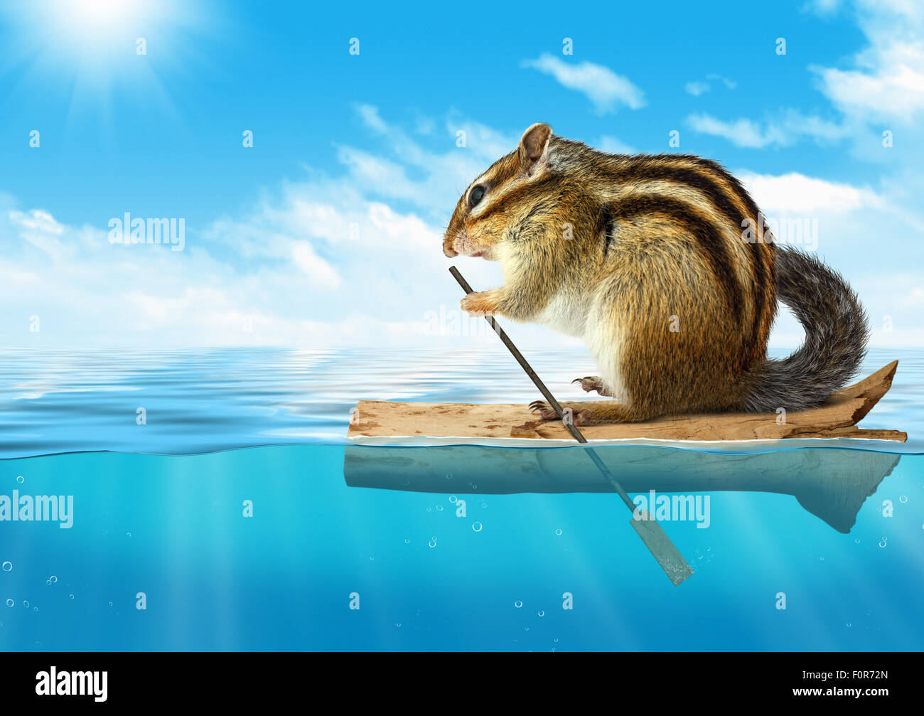 Funny animal, chipmunk floating at ocean, travel concept with copy-space - Stock Image