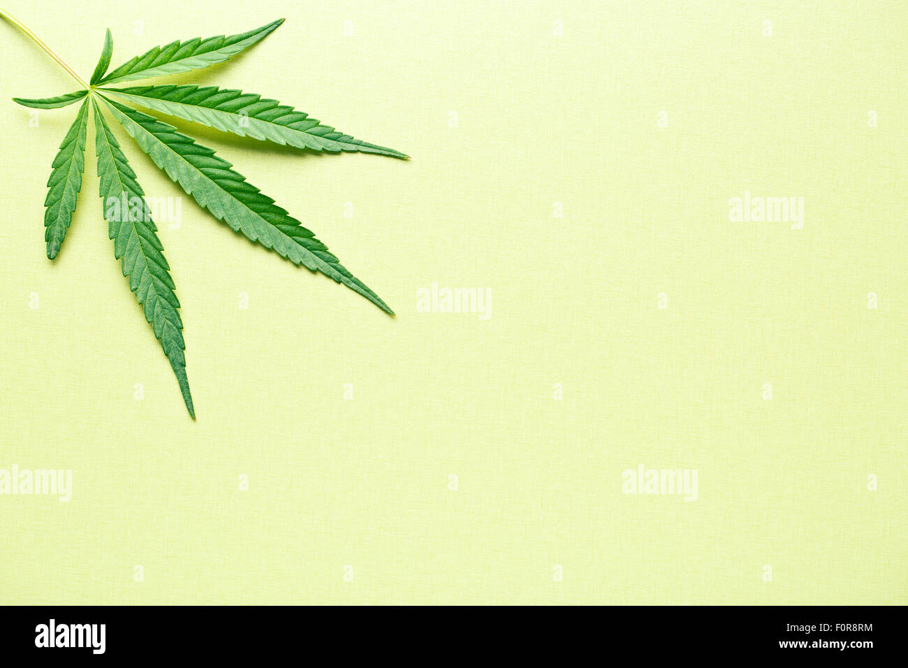cannabis leaf on yellow background - Stock Image