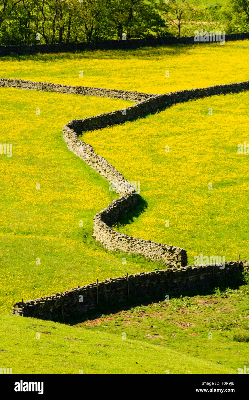 Pattern of stone walls and fields full of buttercups near Gunnerside in Swaledale in the Yorkshire Dales National - Stock Image